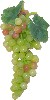 Grapes Green 10 inch fake fruit