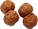 Fake Walnuts 4 Piece Display Prop